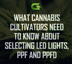 What cannabis cultivators need to know about selecting LED lights, PPF and PPFD
