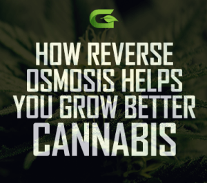 Improve your cannabis quality with Reverse Osmosis Water Treatment